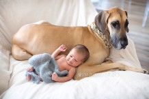 Newborn Photographer Frisco, Dallas Newborn Photographer, Baby Posed, Baby with dog, Great Dane with newborn, KM Photo Studio, Newborn Photo Session